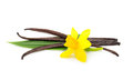 Vanilla pods and flower isolated on white background Royalty Free Stock Photo