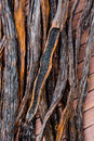 Vanilla pods on wooden background Stock Photography