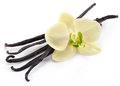 Vanilla sticks with a flower on white background Stock Image