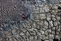 Vanished surface cracked and charred after the fire with vanish Royalty Free Stock Image