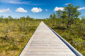 Vanishing wooden footpath through bog area Royalty Free Stock Photo