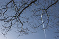 Vapour trail with tree of a plane in blue sky branches covering all of frame Stock Photography