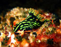 Variable Neon Slug Royalty Free Stock Photo