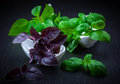 Variation of basil on black background Stock Photography