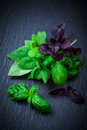 Variation of basil on black background Royalty Free Stock Photos