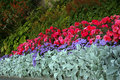 Varied flowerbed beautiful lines of different species of flowers and plants Stock Image