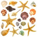 Varied isolated sea shells large assortment of individually on white Royalty Free Stock Photography