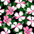 Variegated pink tropical hibiscus flowers seamless pattern Royalty Free Stock Photo