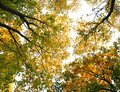 Autumn backgrounds photo for micro-stock