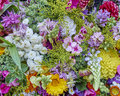 Variety of colorful flowers closeup Royalty Free Stock Photo