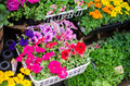 Variety of colorful flowers in flower shop japan Stock Photos