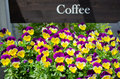 Variety of colorful flowers in flower shop japan Stock Image