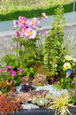Variety of colorful flowers in garden Royalty Free Stock Photo