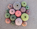 Variety of colorful sea urchins Stock Photo