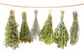 Variety of dried herbs Royalty Free Stock Photo
