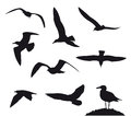 Variety flying sea-gulls vector illustration Royalty Free Stock Photo