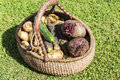 Variety of fresh organic vegetables in the basket. Royalty Free Stock Photo