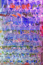 A Variety of Fresh Water Aquarium Fish sold in Transparent Plastic Bag Royalty Free Stock Photo