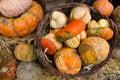 Variety pumpkins display Royalty Free Stock Photos