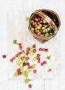Variety of ripe garden gooseberries in birchbark basket Royalty Free Stock Photo