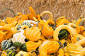 Variety of squashes group in front hays Royalty Free Stock Photography