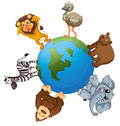 Various animals on earth Stock Image