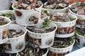 Various Beijing snacks. Stock Image