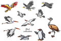 Various birds cartoon set of Stock Photos
