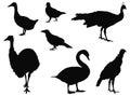 Various birds silhouette