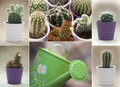 Various cacti and green watering can mix of with Stock Photos