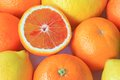 Various citrus fruits such as oranges blood oranges lemons although with a halved blood orange Royalty Free Stock Images