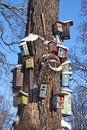 Various colorful bird nest boxes houses hang on old tree trunk in park winter Royalty Free Stock Images