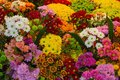 Various Colorful flowers are sale in a flower shop Royalty Free Stock Photo