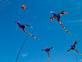 Various Colorful Pterodactyl Kites Stock Photos