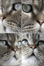 Various faces of the cat Stock Photos