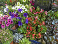 Various flowers colorful garden in the market waiting for sale Royalty Free Stock Photo