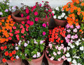 Various flowers impatiens in containers Royalty Free Stock Photo
