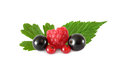Various fresh fruits berries (raspberries, black currants, red currants), with leaves isolated Royalty Free Stock Photo