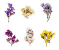 Various fresh magic herbs hanging isolated on white background. Royalty Free Stock Photo
