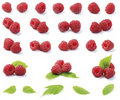 Various fresh raspberries Stock Photos