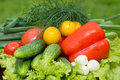 Various fresh vegetables from garden tomatoes cucumbers pepper onions dill chives lettuce Stock Photos
