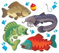 Various freshwater fishes 2 Stock Photography