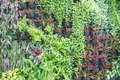 Various Of Green Plants Wall D...