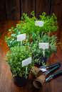 Various herbs for planting with garden tools Royalty Free Stock Images