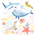 Various interesting colorful sea animals white background Stock Photos