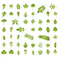 Various kind of natural leaf Royalty Free Stock Photography