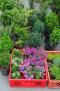 Various kinds of seedlings plants and flowers arranged in plastic crates waiting on wholesale market to be sold Royalty Free Stock Photo