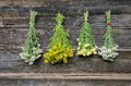 Various medical herb bunch on wall wooden old Stock Photo