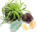 Various minerals and crystals displayed with air plant Stock Image