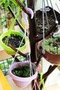 Various Organic Vegetables Royalty Free Stock Photo
